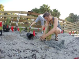 Spring 2020 NCBS Living Shoreline Volunteer Days @ UF IFAS Nature Coast Biological Station | Cedar Key | Florida | United States