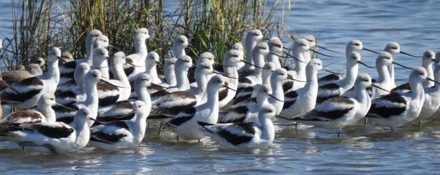 Cedar Keys Audubon